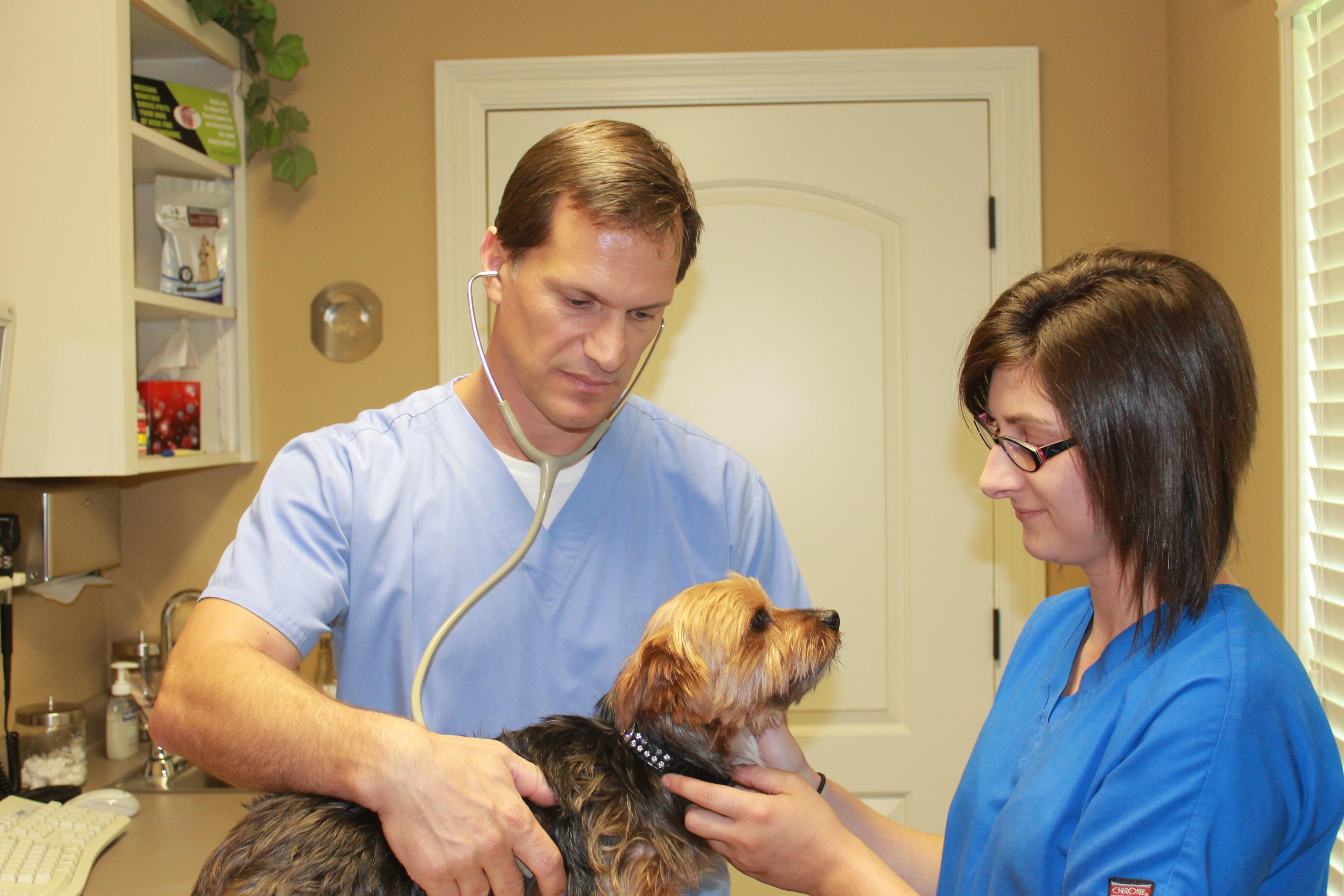 Vet Med Animal Hospital image 2