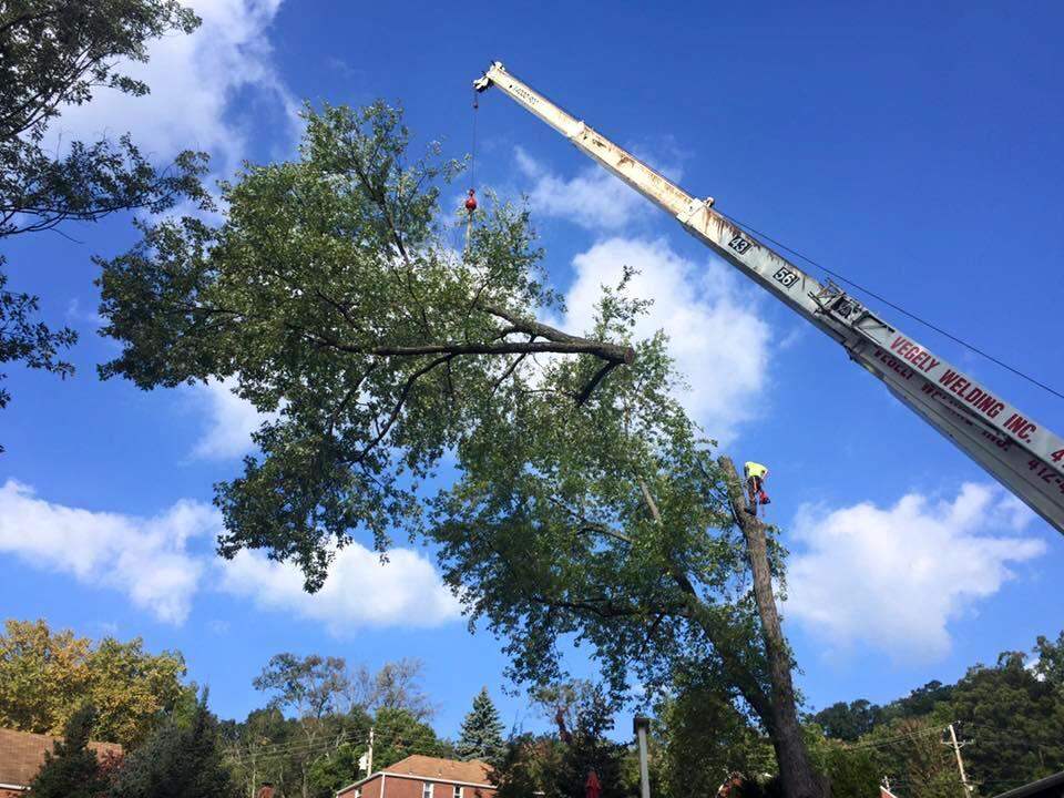 Horhut Tree Experts image 5