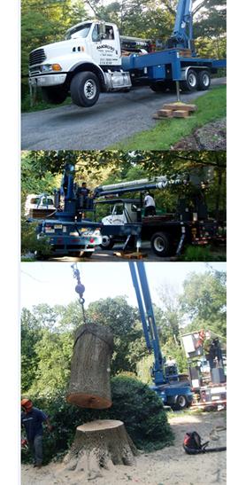 Amoroso Tree Service Inc image 6