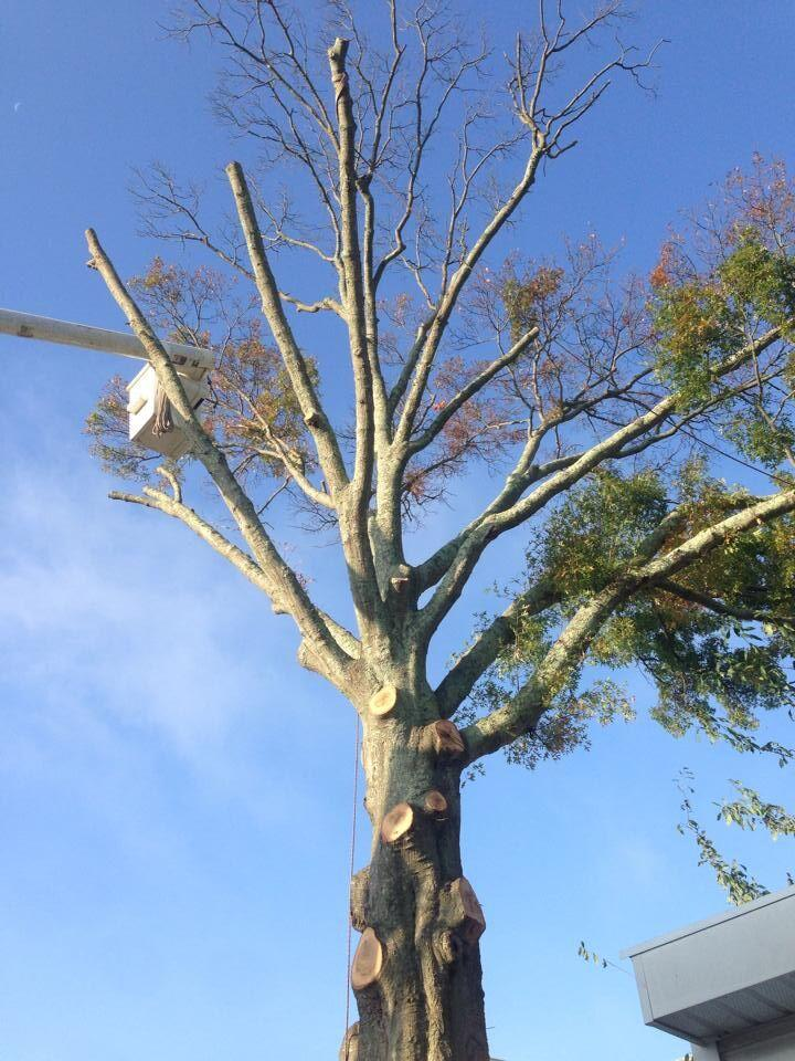 Toms River Tree Service image 6