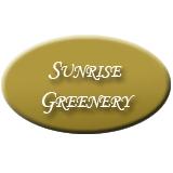 Sunrise Greenery