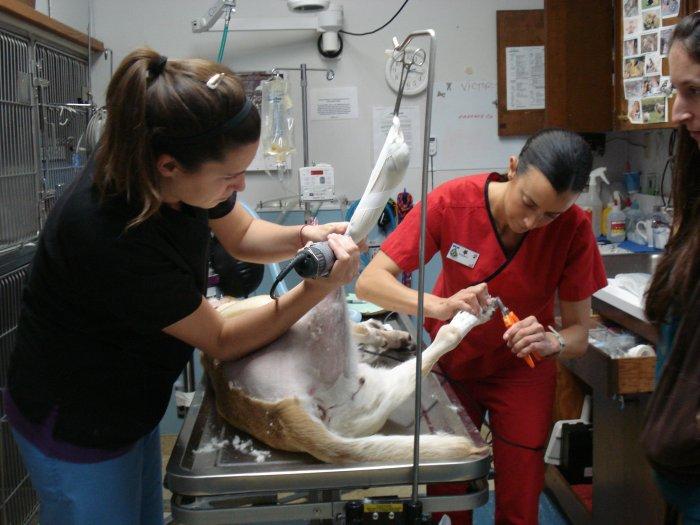 VCA Madera Pet Hospital in Corte Madera, CA - (415) 849-2...