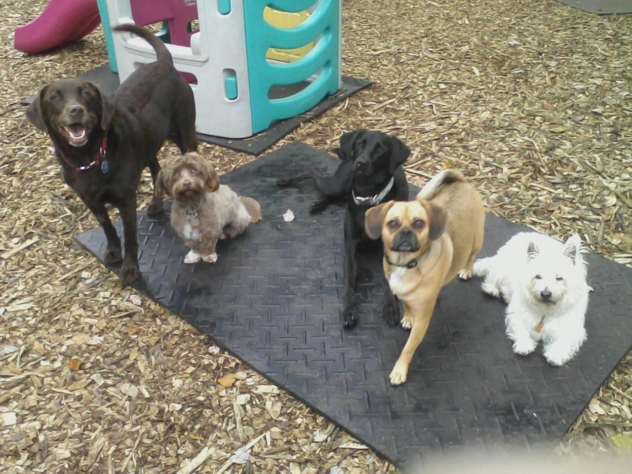 Charlene's Pet Services image 3