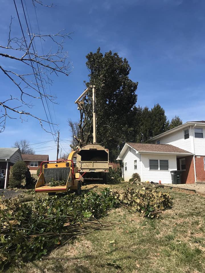 Brown Hound Tree Service