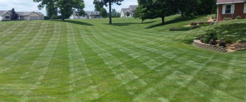 Picture Perfect Lawn Maintenance and Snow Removal image 0