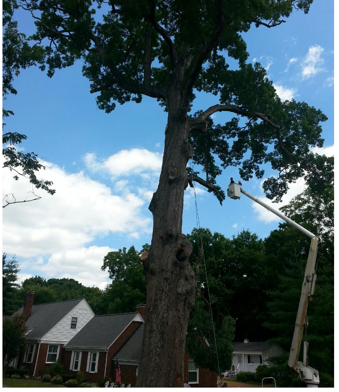 Hughes Tree Service image 7