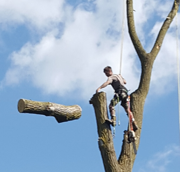 Coffman's Tree Service image 26