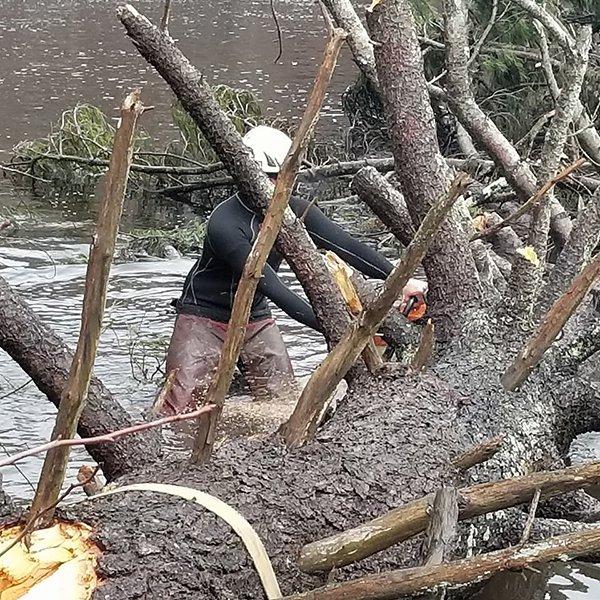 Affordable Tree Experts LLC image 8