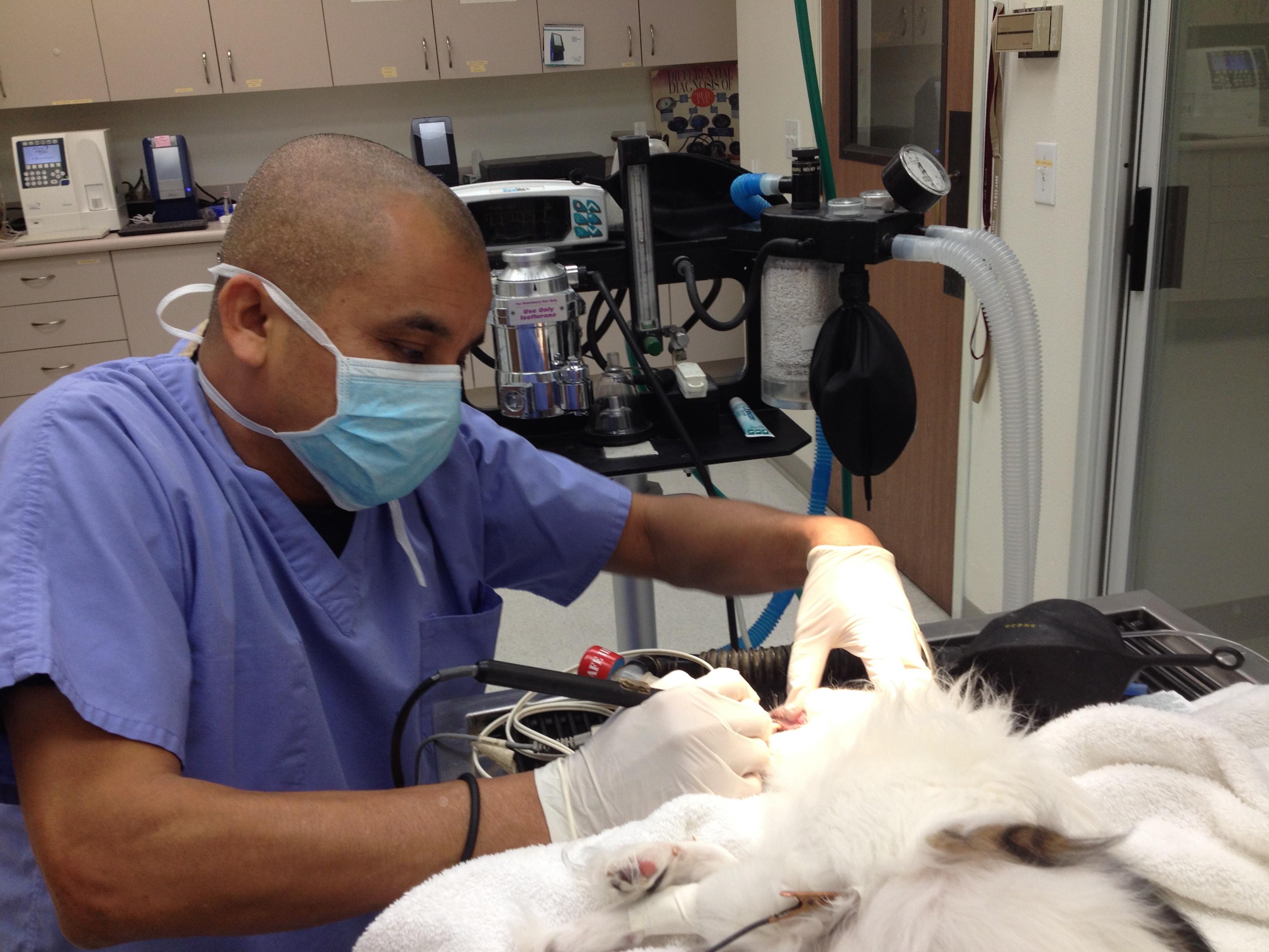 Orange Canyon Pet Clinic image 4