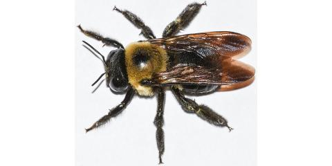 TAAP Pest Elimination image 1