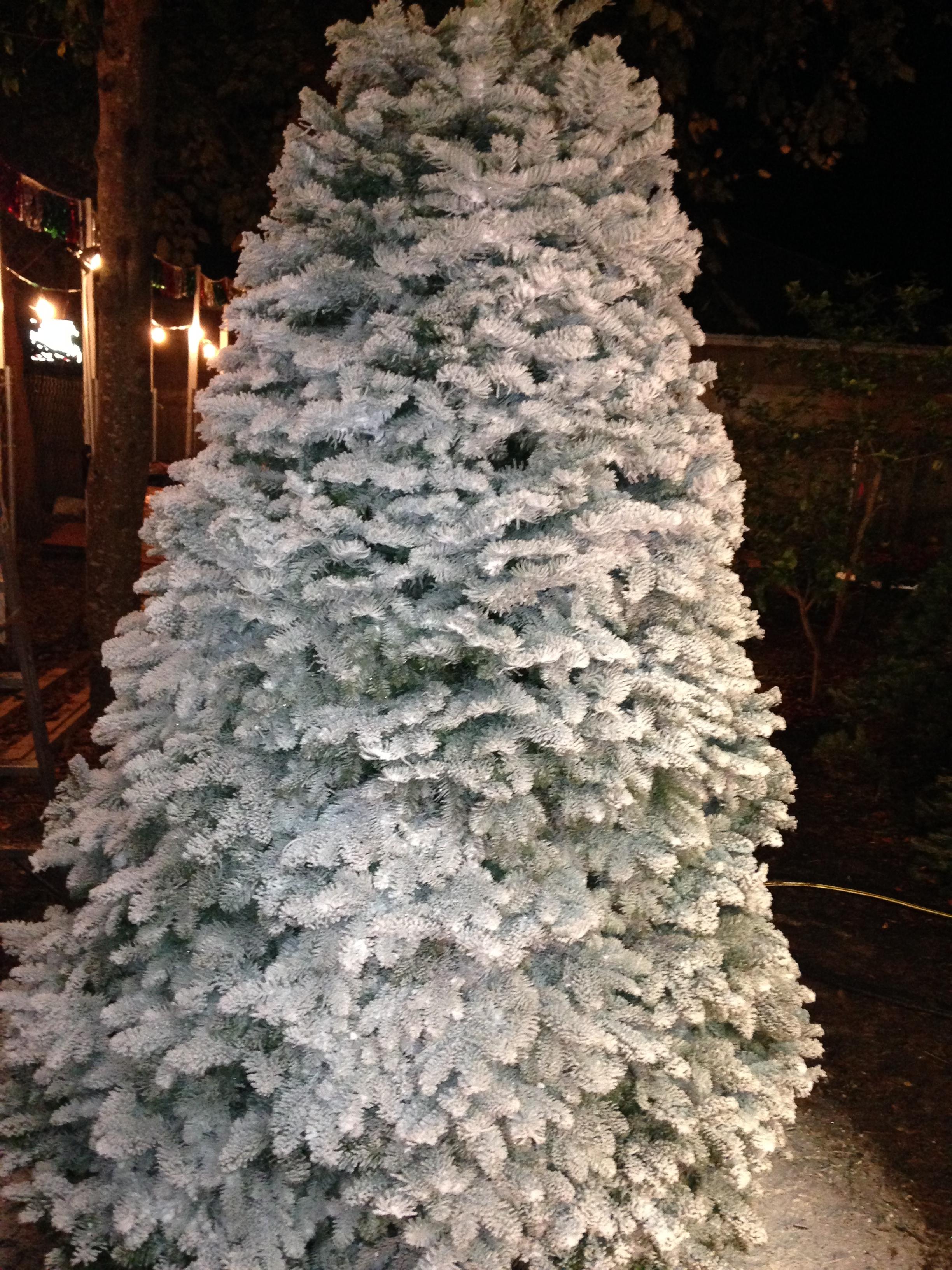 Dave's Christmas Tree Lot image 17