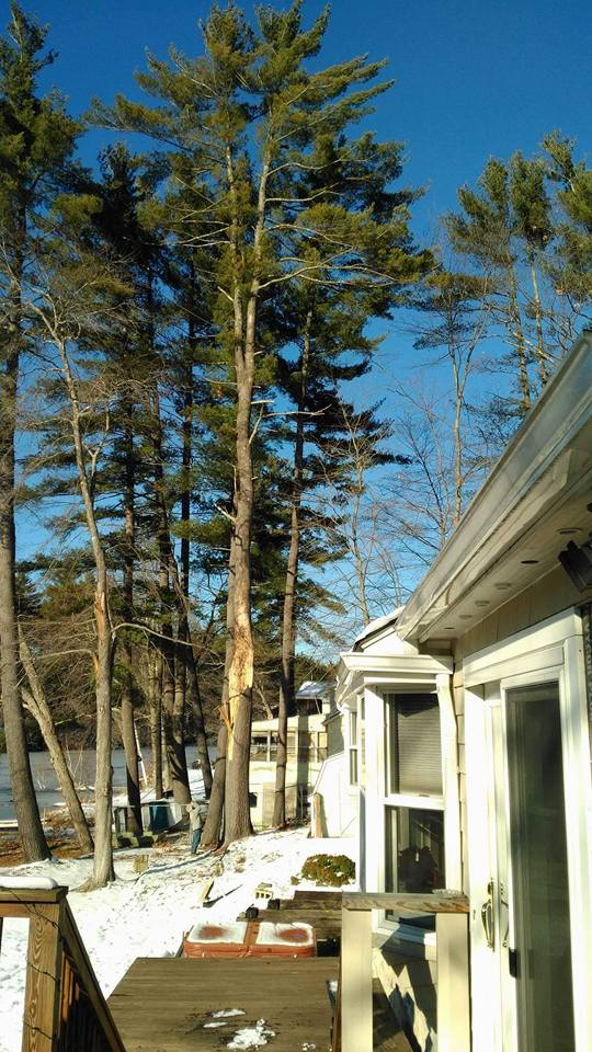 Tommy Tree Service & Yard Expansion