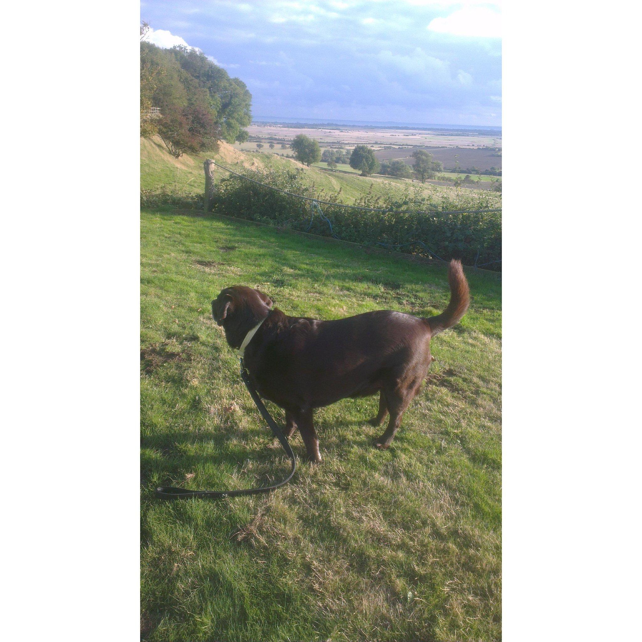 Woodlands at Home Dog Daycare & Boarding - Ashford, Kent TN25 7EP - 01233 721845 | ShowMeLocal.com