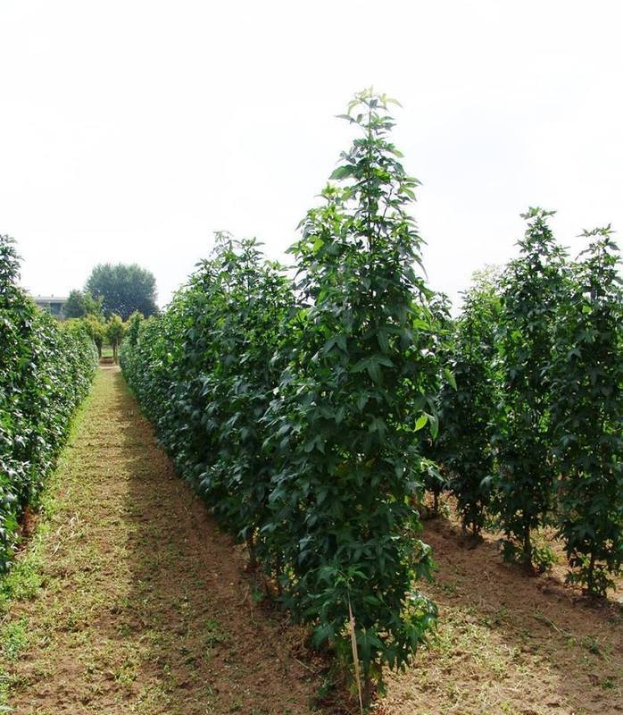 Azienda Agricola Vivai Goi