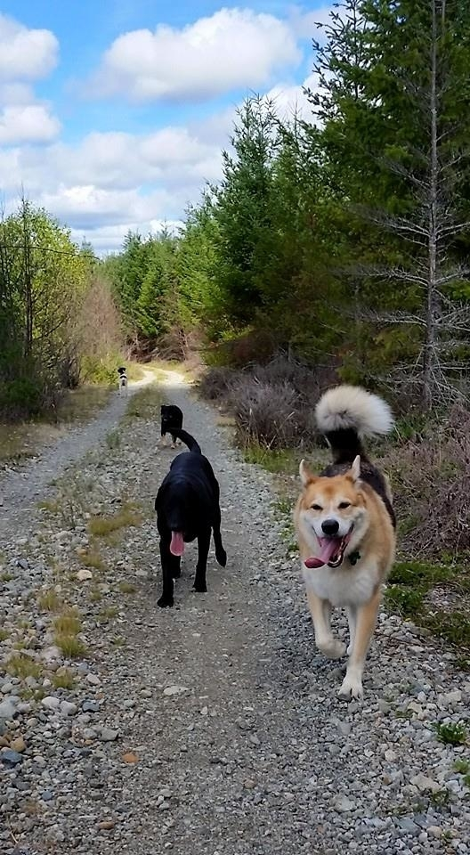 Go Dog Go Dog Training Black Creek Bc