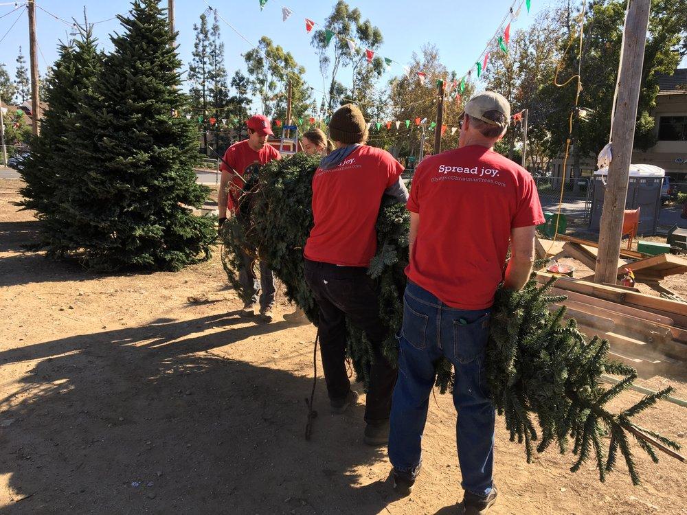 Olympic Christmas Trees 7110 Archibald Ave Rancho Cucamonga Ca