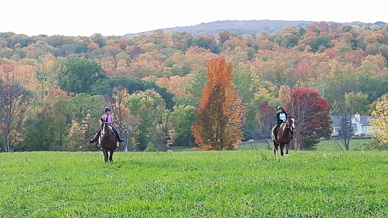 Heartfelt Equestrian