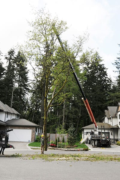 Archon Tree Services, Inc. image 7