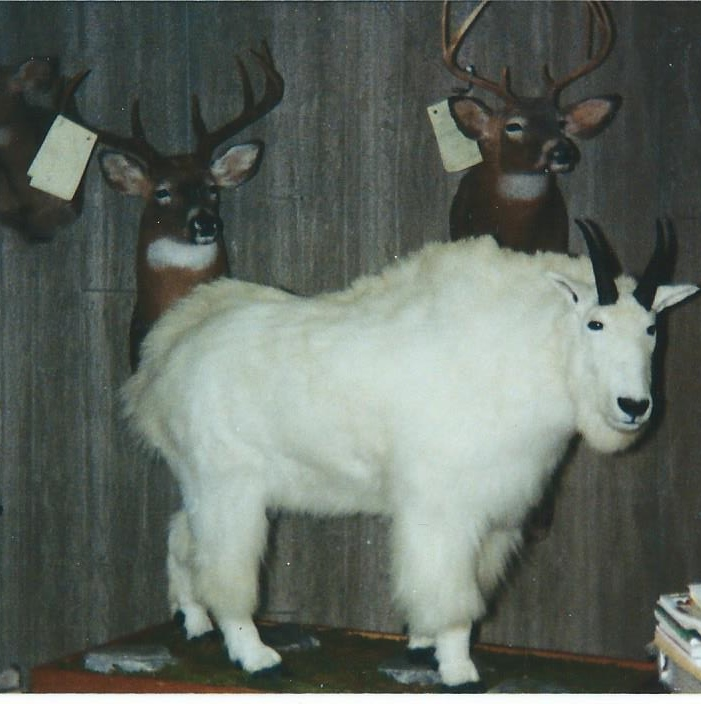 Ron's Taxidermy image 0
