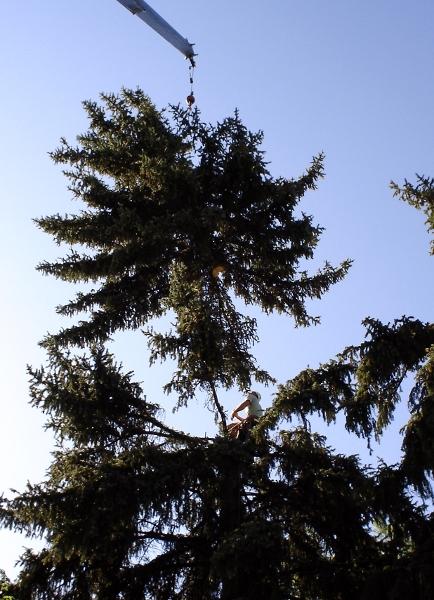 Swingle Lawn, Tree & Landscape Care image 14