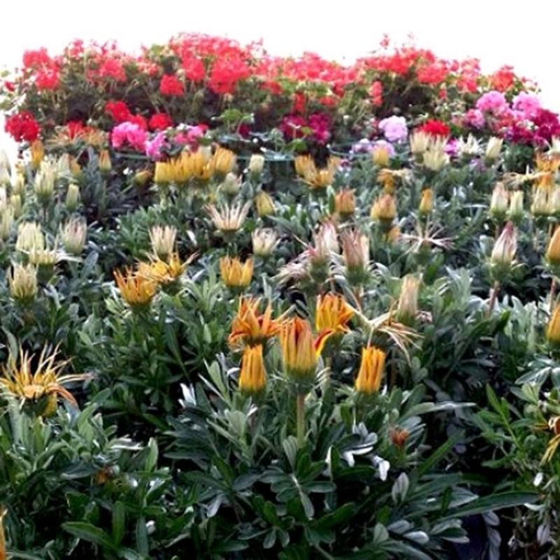 Vivai montanaro sas vivai piante articoli da giardino for Vivai piante