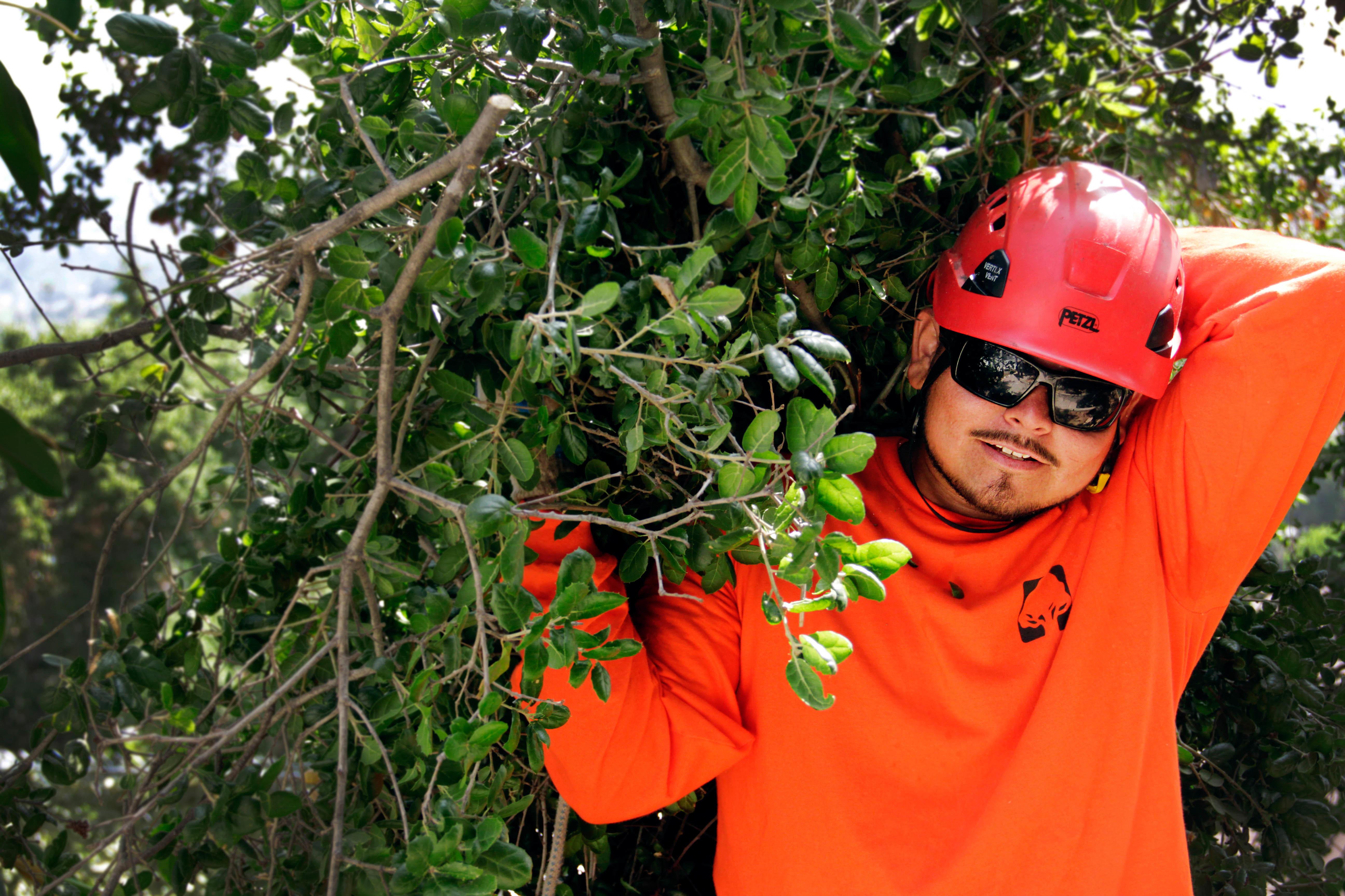 Flintridge Tree Care image 0