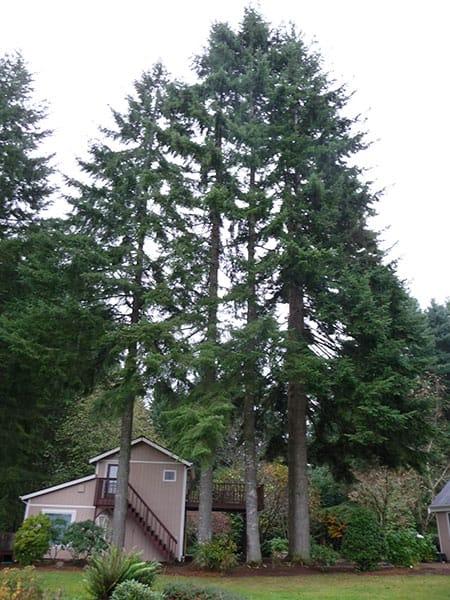 Archon Tree Services, Inc. image 14