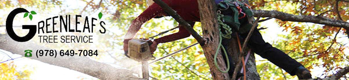 Greenleaf's Tree Service image 38