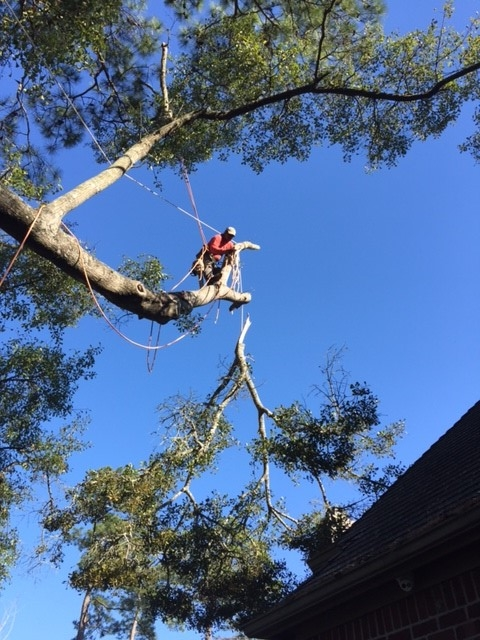 Houston Tree Removal image 2