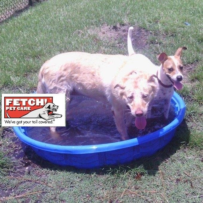 Fetch! Pet Care of Manassas image 8