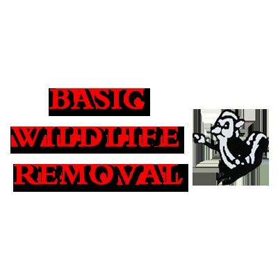 Basic Wildlife Removal image 0