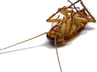 Accurate Pest Control, Inc.