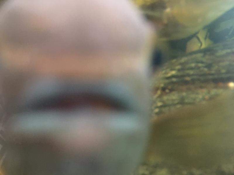 Exotic Aquatic in Williams Lake