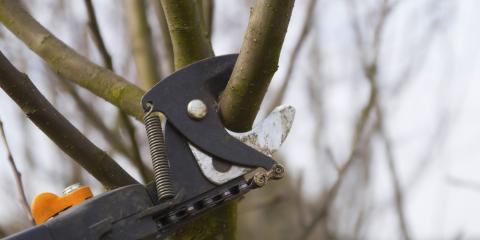 Compton's Tree Experts image 0