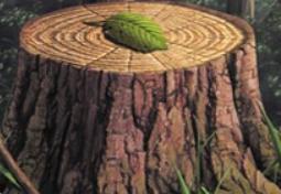 Bishops Tree Service Inc. image 3