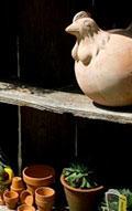 Snavely's Garden Corner image 8