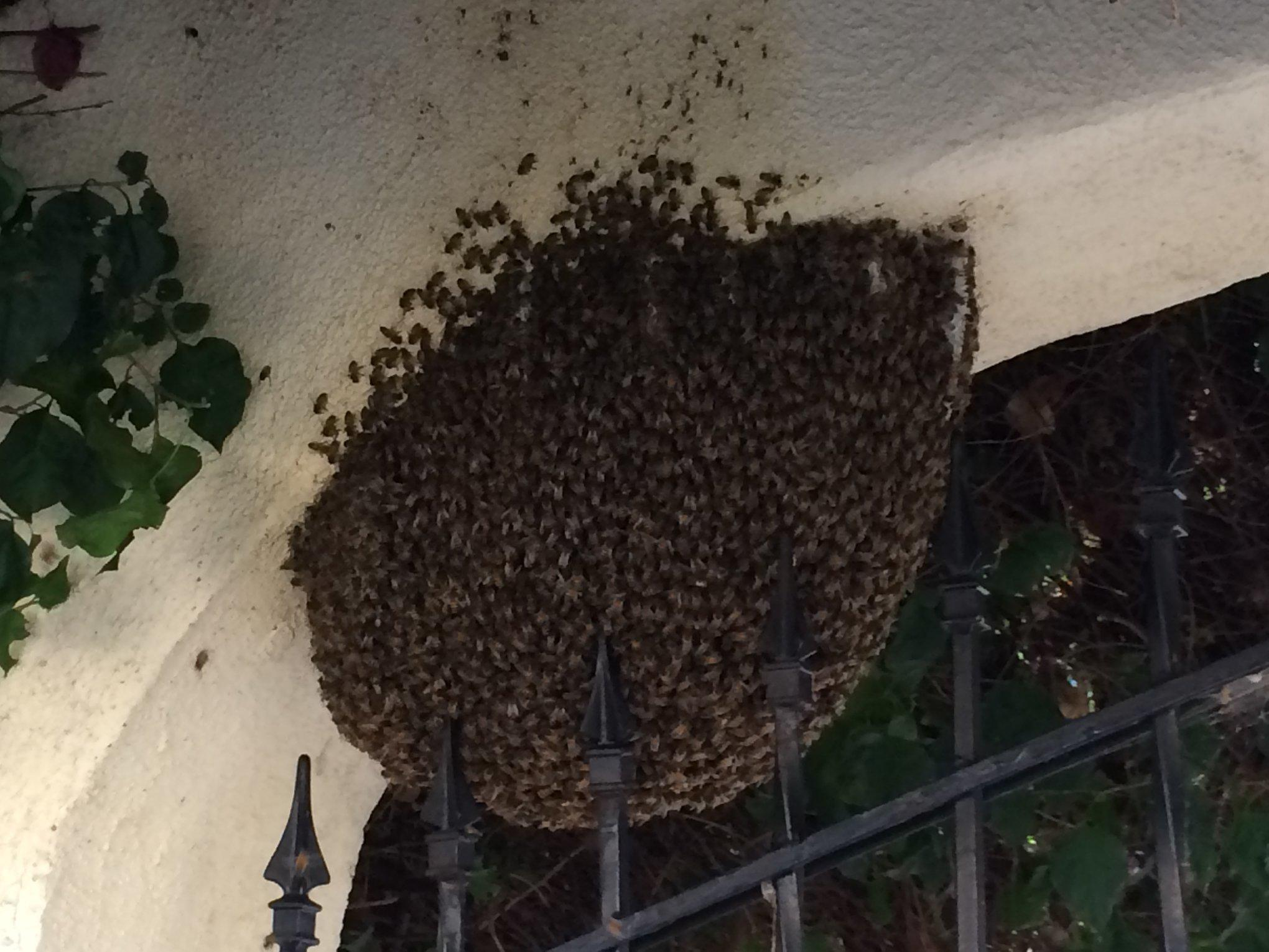 Bee Free Bee Removal