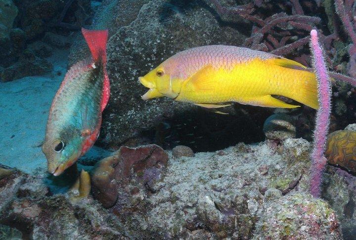 Underwater World Scuba Center image 4
