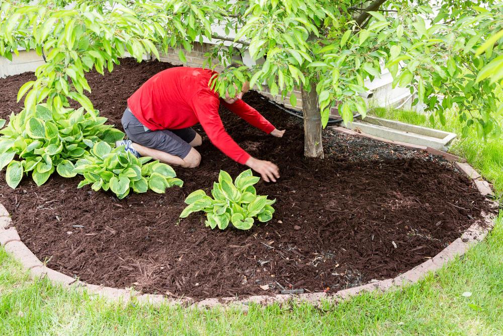 Kojack's Lawn Service image 3