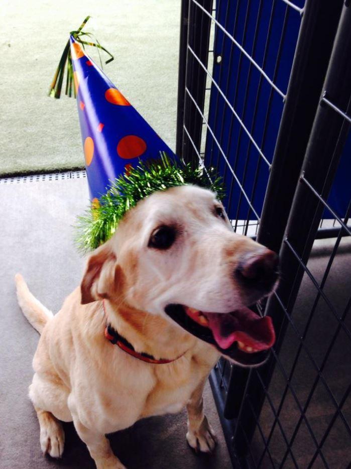 Doggie Daycare & Motel image 3