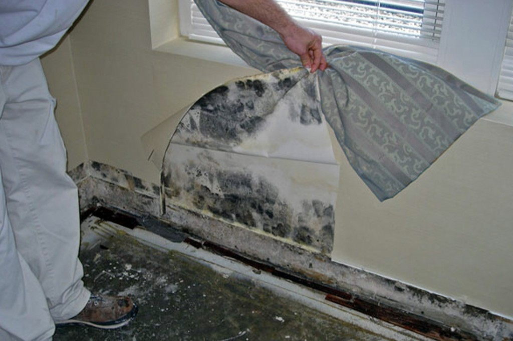 Action Home Inspection Services image 2