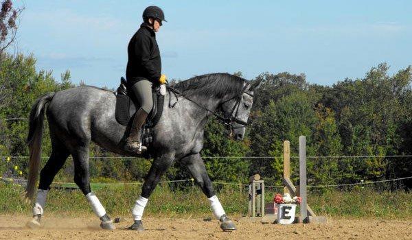 Whisper Wind Equestrian Center Inc image 3