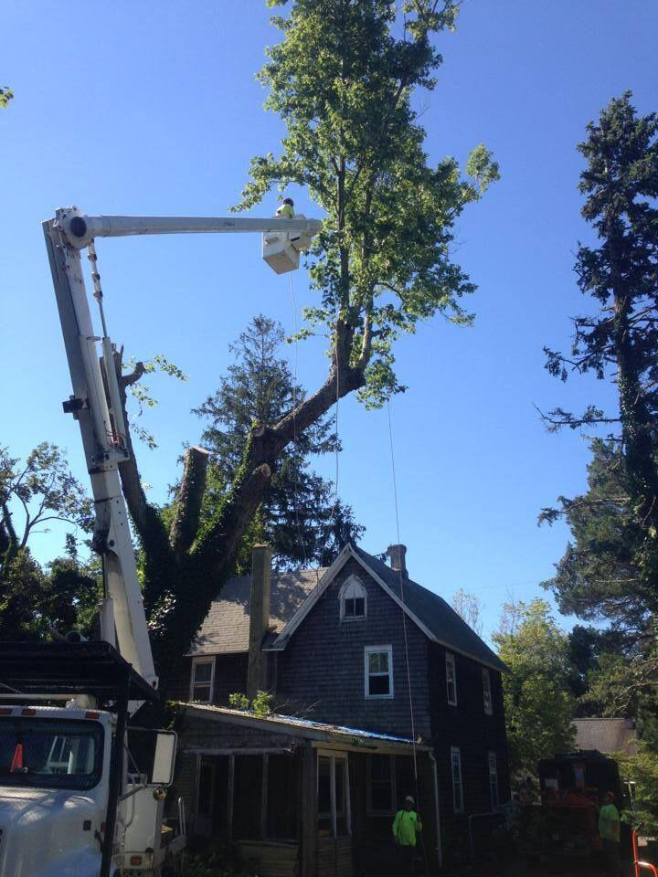 Toms River Tree Service image 7