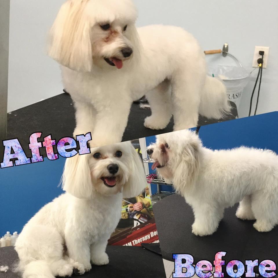 Ashford Dog Grooming Houston Tx
