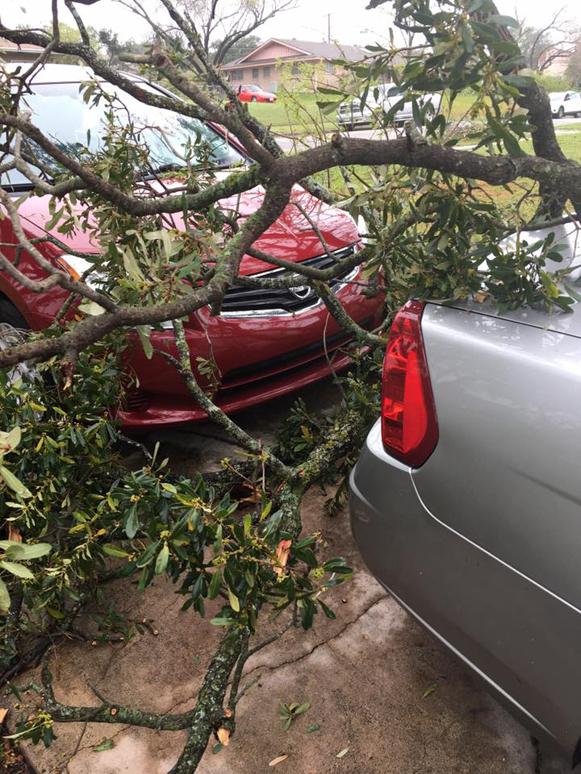 Almanza Tree Trimming Service & More image 2
