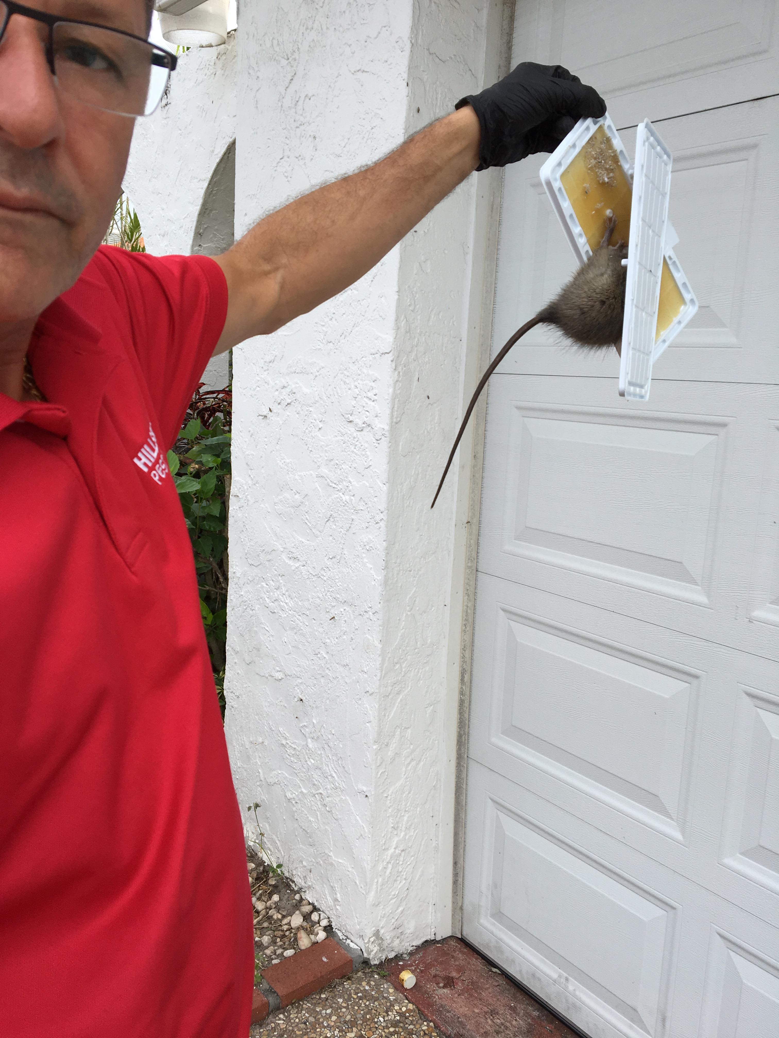 Hillsboro Pest Control image 0