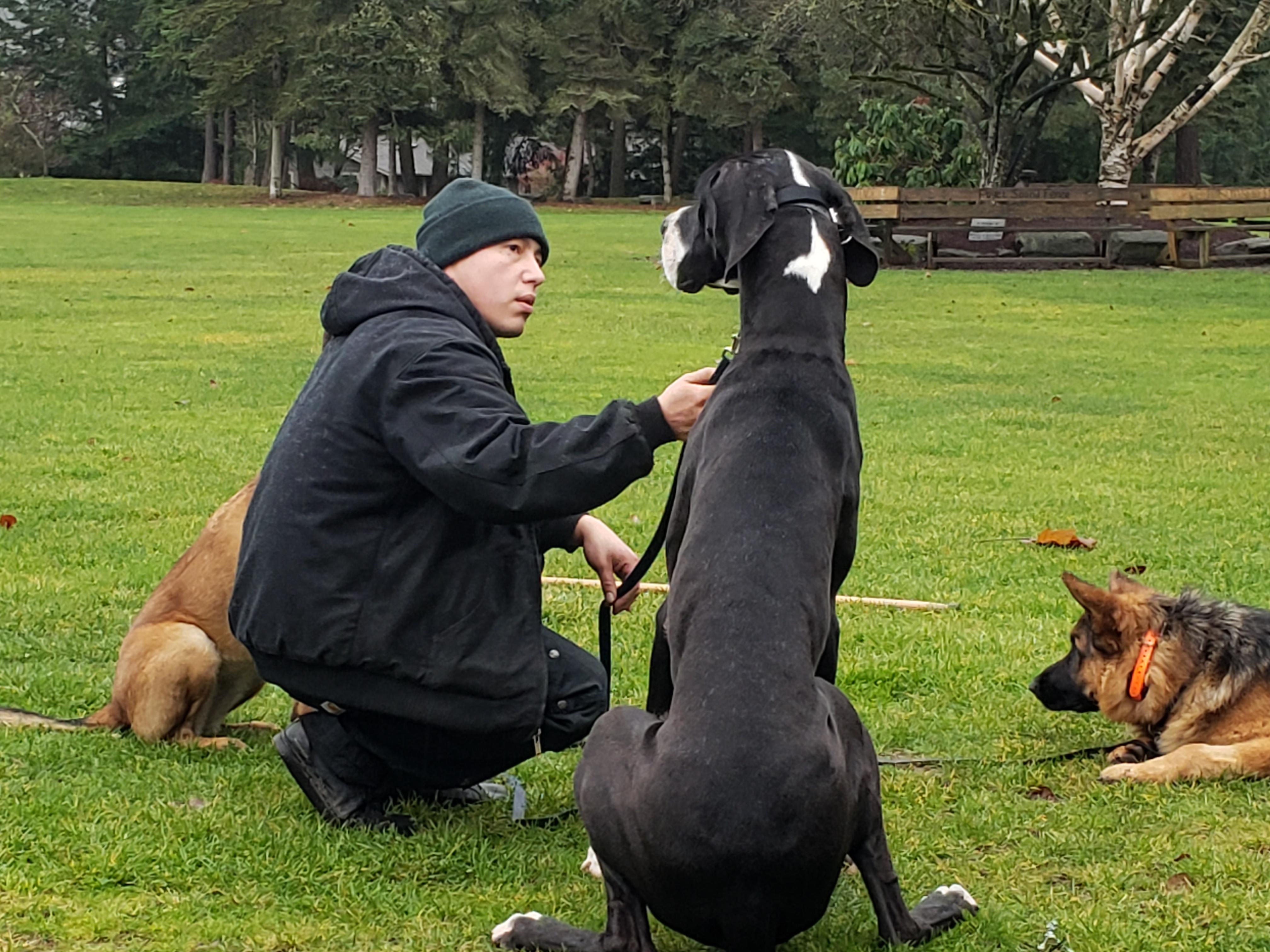 Dog Control(Training) image 1