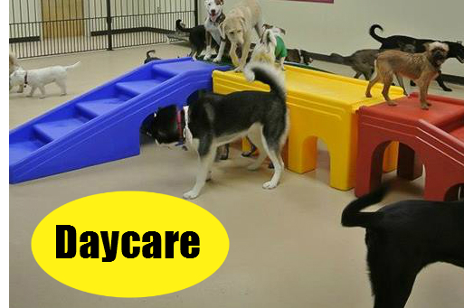 Jagger's Doggie Daycare, Dog Grooming, Training & Boarding image 1