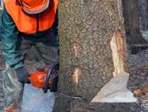 Bostwick Tree Service LLC image 2