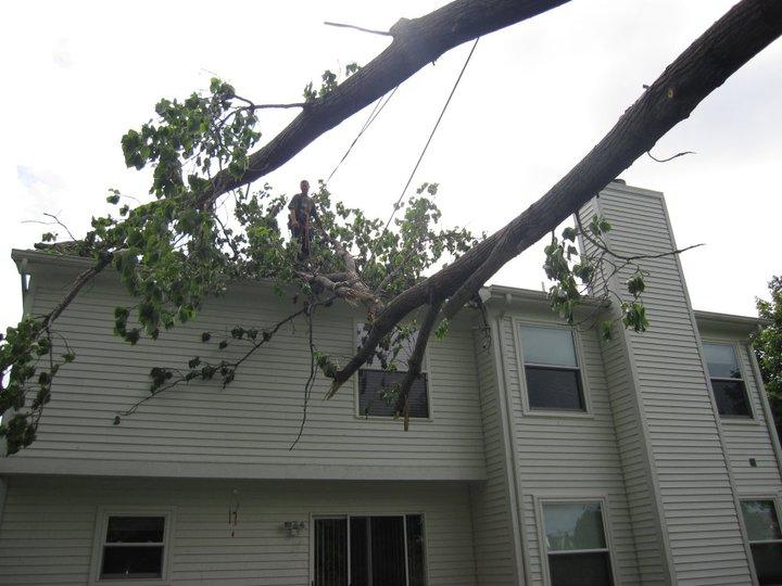 spears tree service image 9